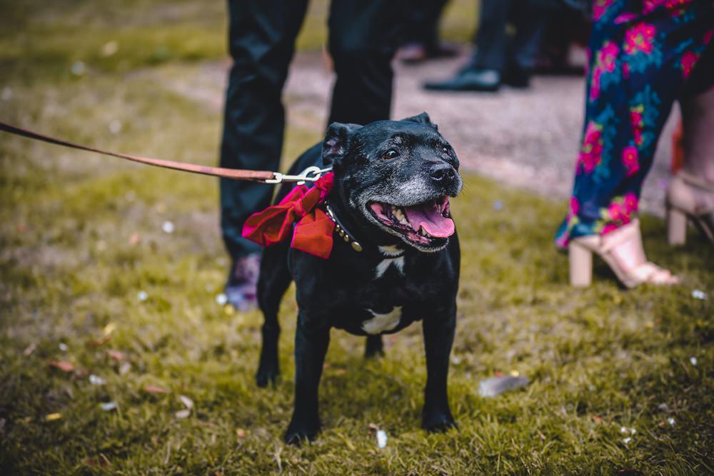 Dog Bow Collar DIY Bohemian Wedding Love & Bloom Photography