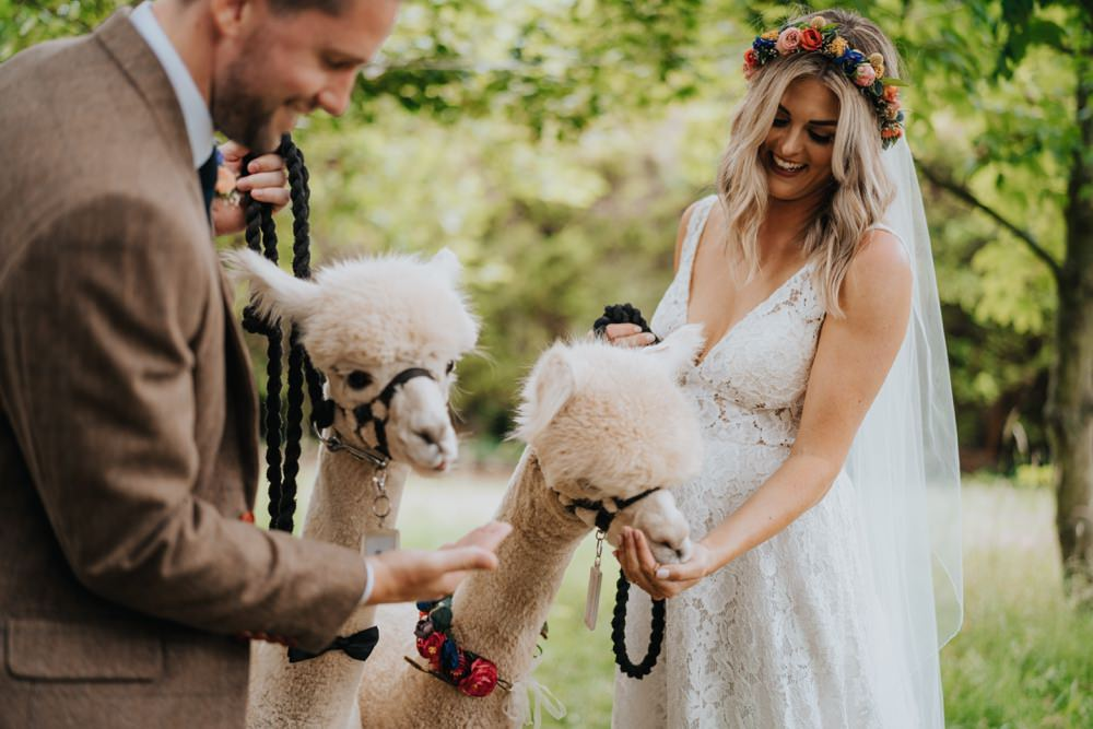 Alpacas Animal Lovers Wedding Bloom Weddings