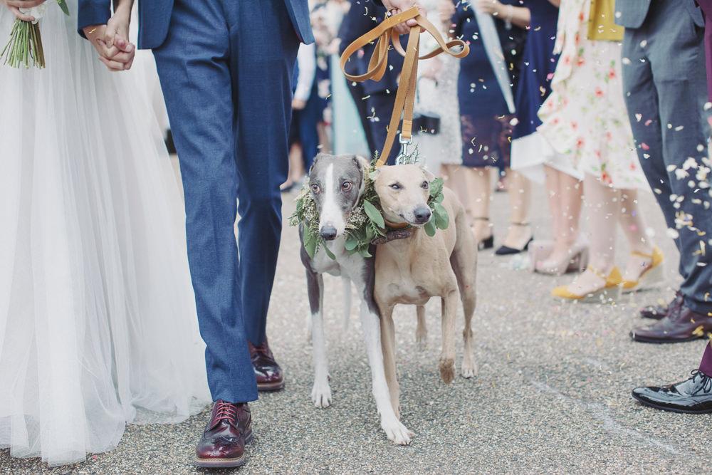 Dogs Pets Hide Sheffield Wedding Sasha Lee Photography