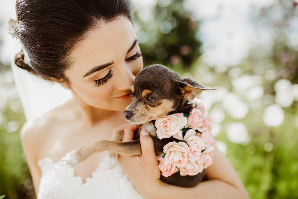 Dog Pet Greek English Wedding Holly Collings Photography