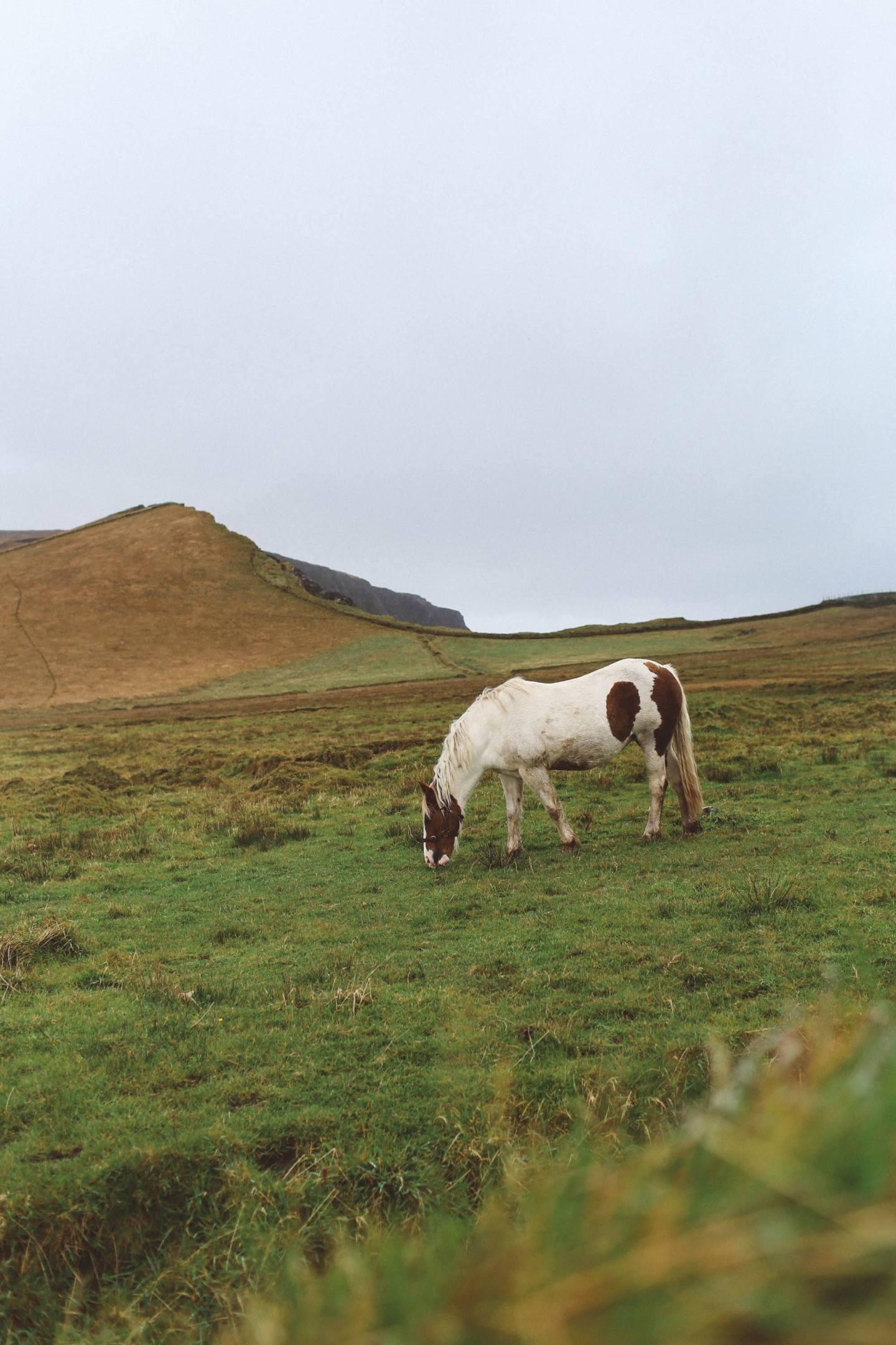 cliffs of moher ireland horse