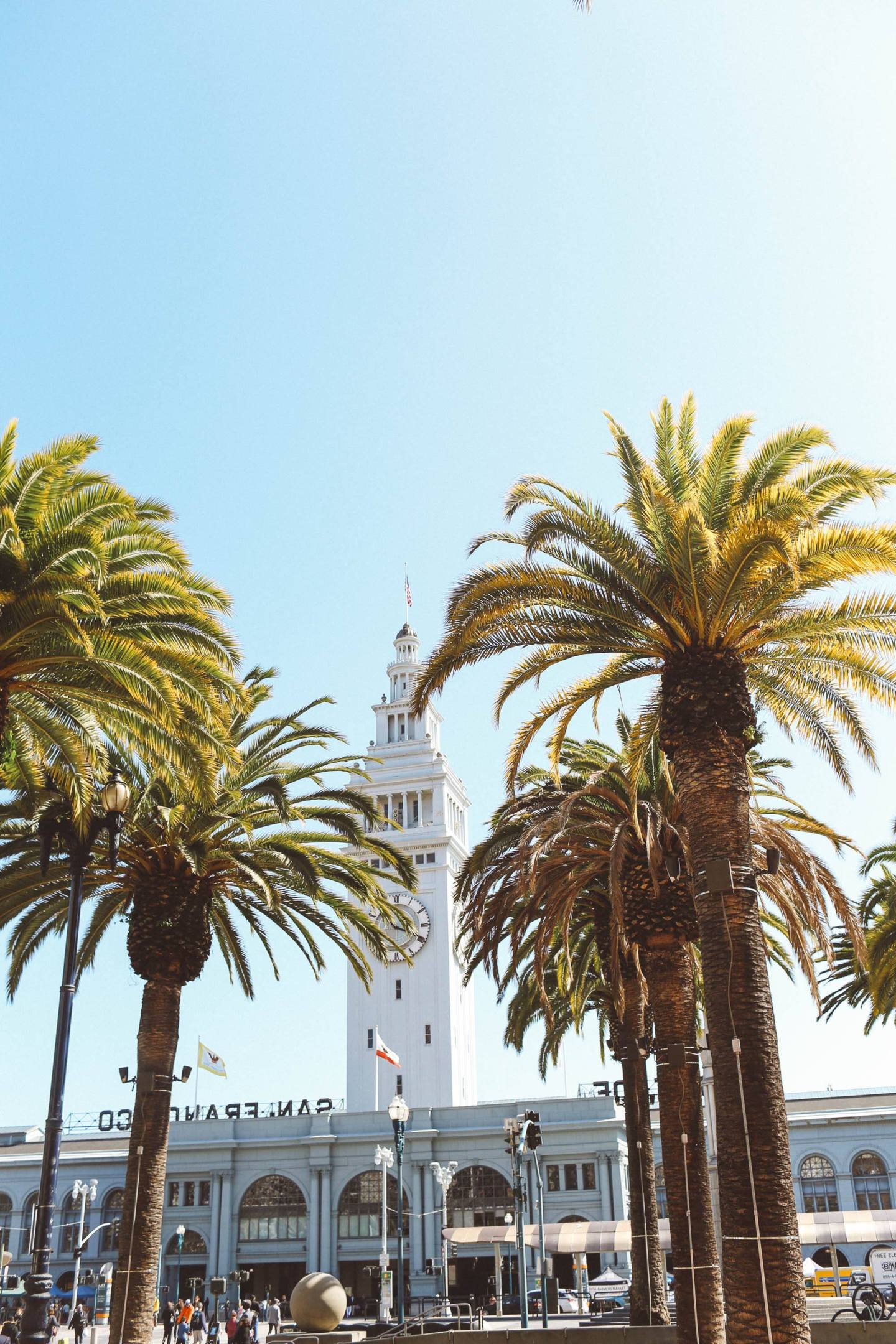 Palm trees with ferry building in the background