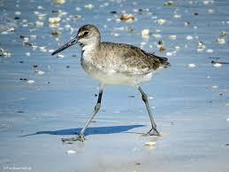 I love beach birds.
