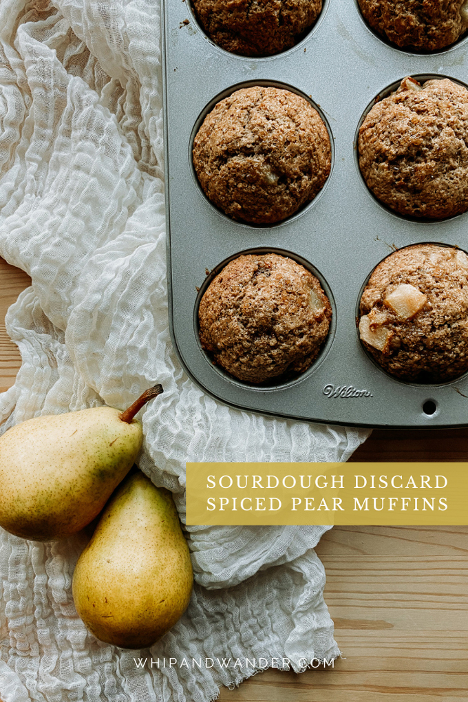 two fresh Bartlett pears resting next to a muffin tin filled with Sourdough Discard Spiced Pear Muffins