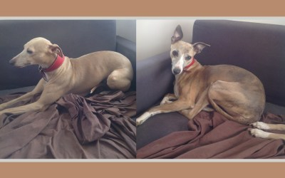Meg and Jem – Rehomed