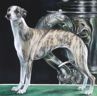 An exciting opportunity to support JR Whippet Rescue