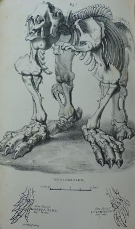 Buckland_Megatherium