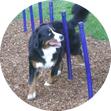 Fibar Surfacing for Dog Parks