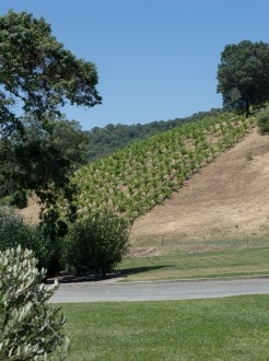 hillside at saracina vineyard | whiskandmuddler.com