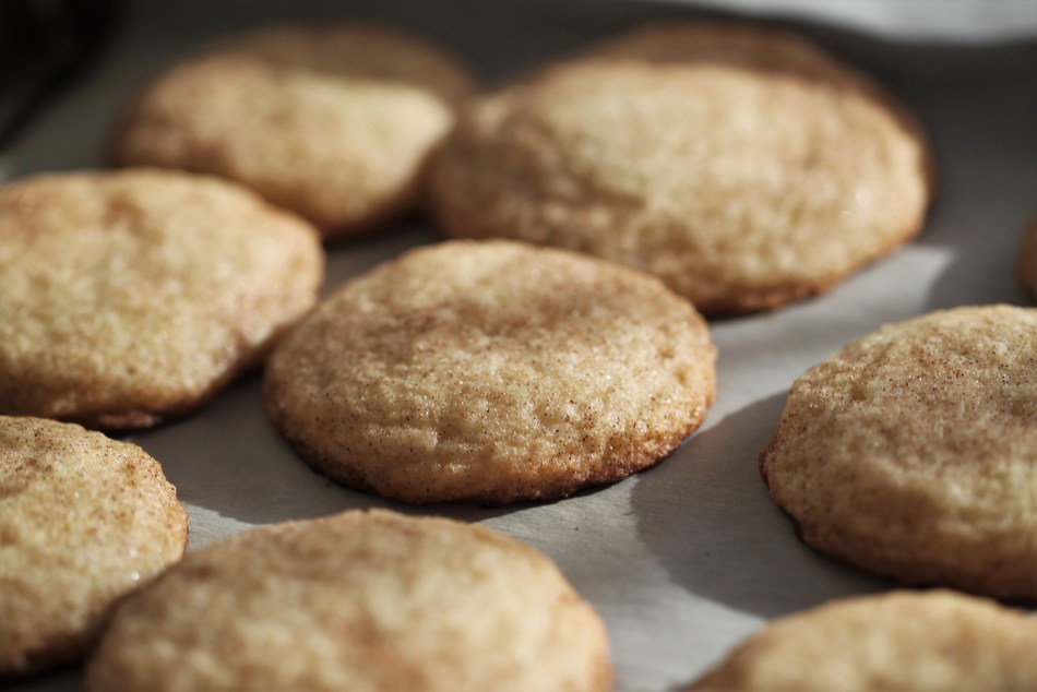 Baked maple snickerdoodles sit together on a sheet of parchment paper. The sun is hitting them at a lovely angle, and the cookies throw stark shadows against the white surface.