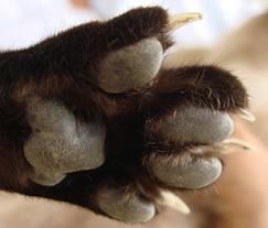 catnails3