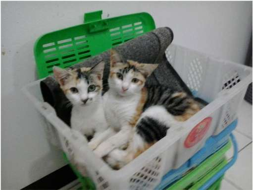 twin in basket