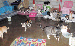 "The cattery: Resident ""mobsters"" attempt to find a dry spot"