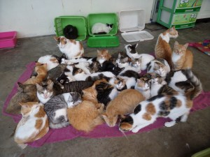 Many cats resting together