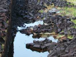 Von markjhandel - Peat Bog, CC BY 2.0, https://commons.wikimedia.org/w/index.php?curid=11795935