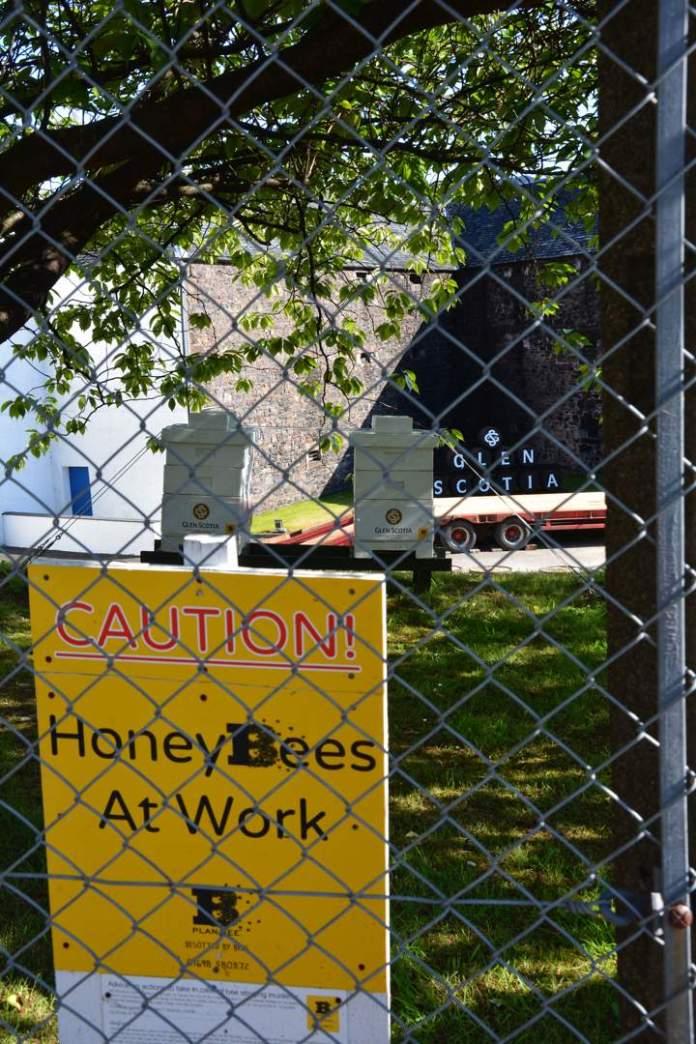 Die Honigbienen von Glen Scotia. © Stefan Bügler