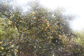 frisk-frugt1