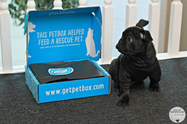 PetBox-January-02