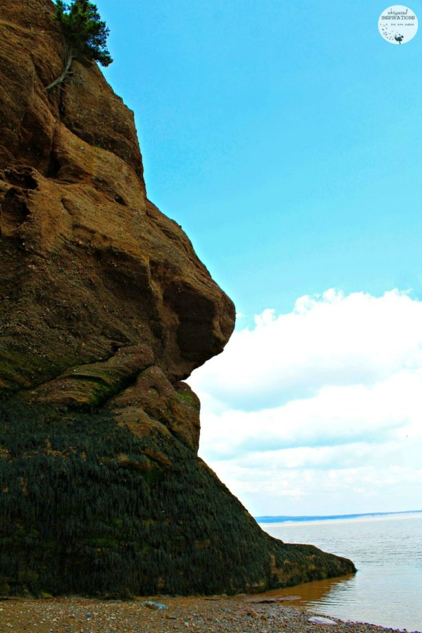 The gorgeous sky is greeted by a rock formation at Hopewell Rocks. The seaweed covers the rock formation.