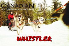 Whistler Dog Sledding Canadian Wilderness Adventures