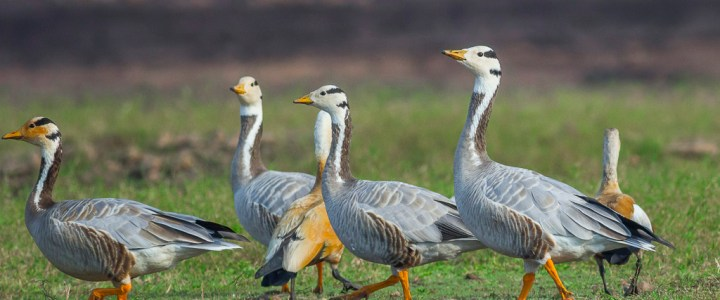 Bird-watching at Veer Dam – Pune