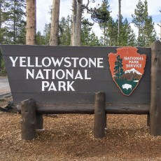 the amazing Yellowstone!