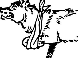 骨折したウルフ