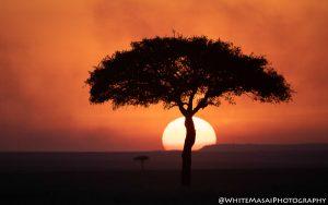 Sunset White Masai