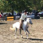 Schooling ponies