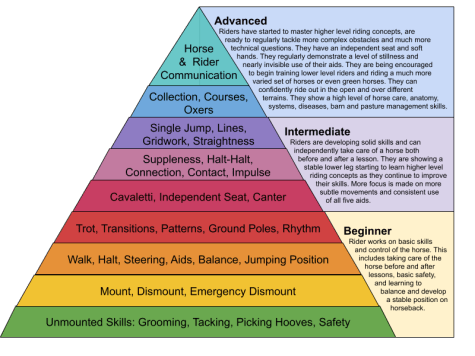 Horseback riding levels skills and training hierarchy