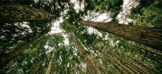 treetops-2-whc-site