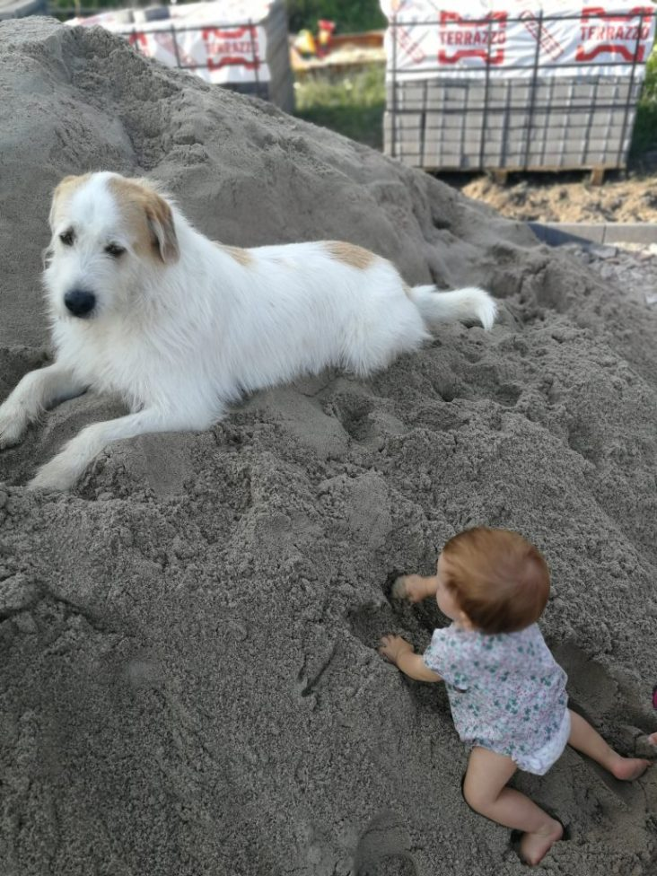 child and a dog raising children with dogs