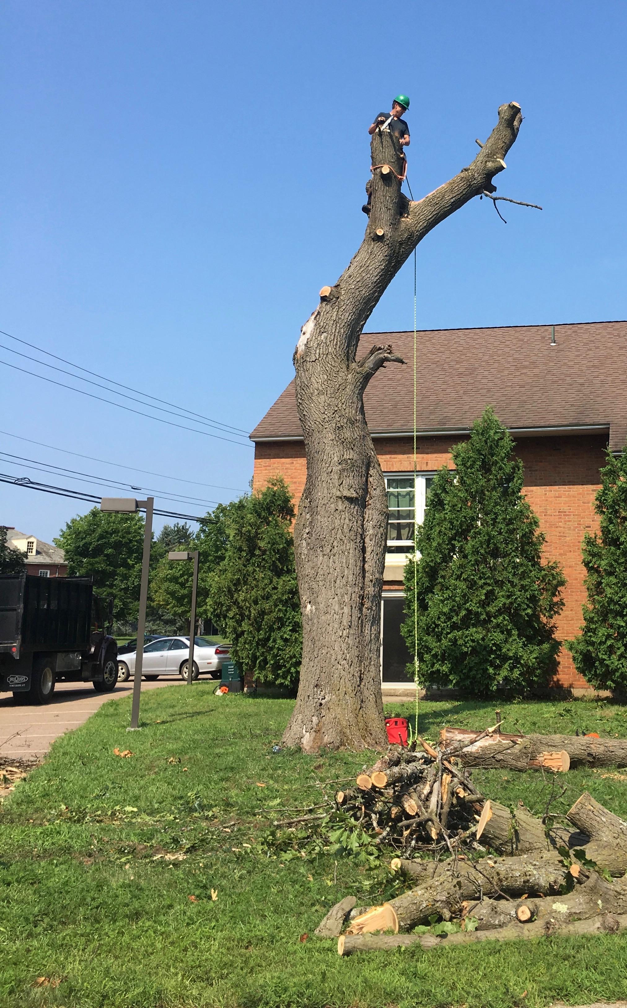 White Falcon Tree Work