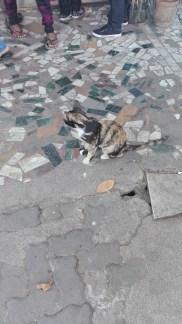 Token Cat Pic2