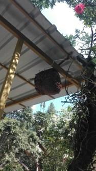massive flying ant hide