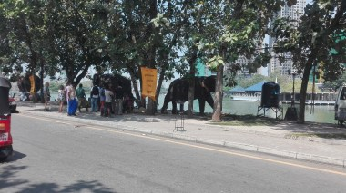 Sri Lankan elephants lining the relaxing (in chains) before the parade