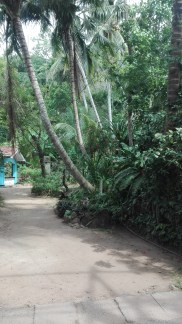 on the way to Jungle Beach