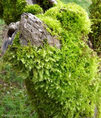 Moss tree-2