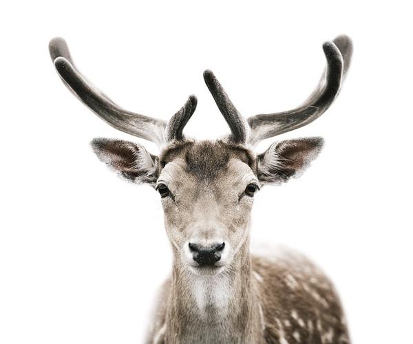 Morten Koldby, Deer