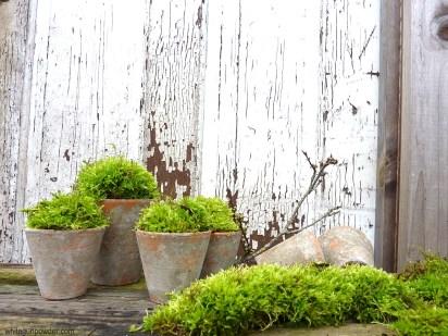 Moss & Pots