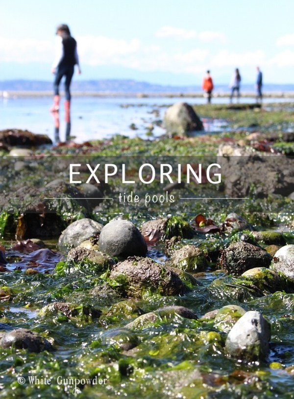 the beach / tide pools near  Me Kwa Mooks Park pic1 w700 x 950h-1