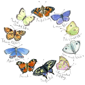 Butterflies II - Madeleine Floyd - Limited Edition
