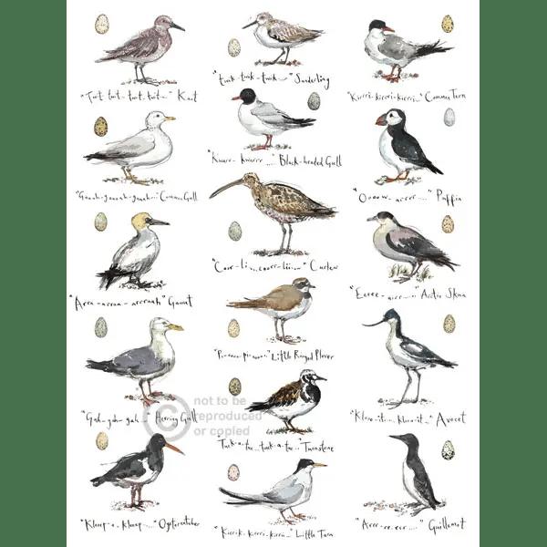 Sketchbook Coastal Birds - Madeleine Floyd - Limited Edition