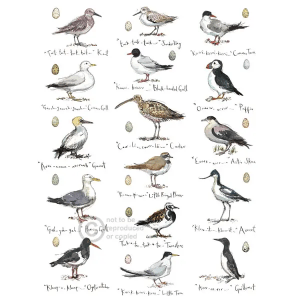 Sketchbook Coastal Birds - Madeleine Floyd - Limited Edition