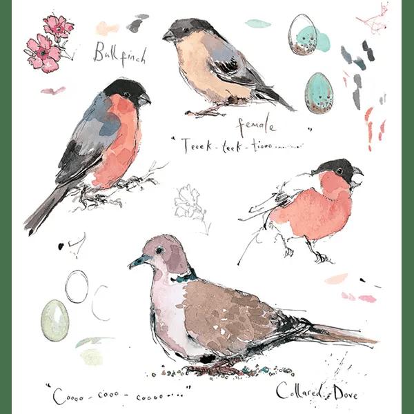 Sketchbook Dove and Bullfinch - Madeleine Floyd - Limited Edition
