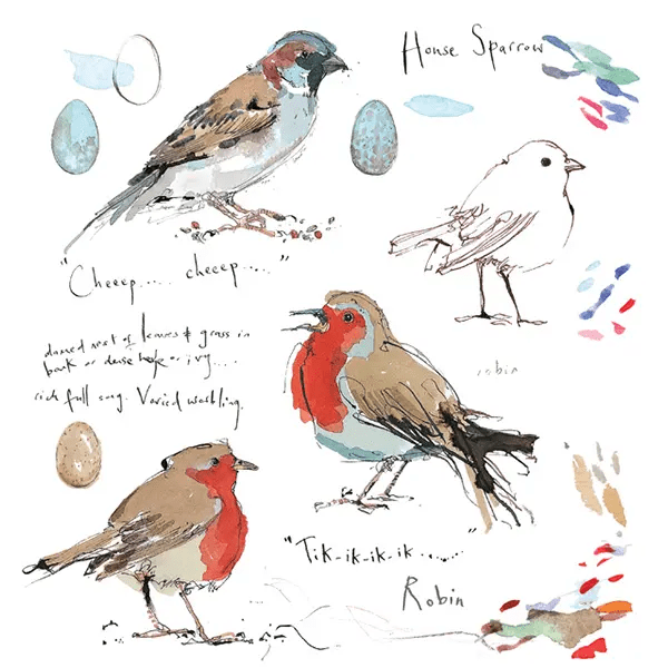 Sketchbook Sparrow and Robin - Madeleine Floyd - Limited Edition