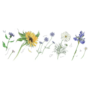 Summer Flowers 2 - Madeleine Floyd - Limited Edition