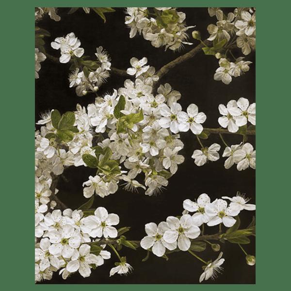 Cherry Blossom - Mia Tarney - Limited Edition