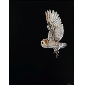 Night Flight - Natalie Toplass - Limited Edition