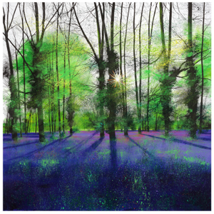 Sunburst and Bluebells - Paul Evans - Limited Edition